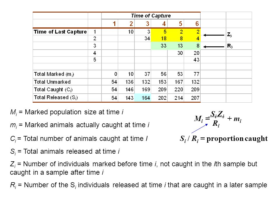 M i = Marked population size at time i m i = Marked animals actually caught at time i C i = Total number of animals caught at time I S i / R i = proportion caught S i = Total animals released at time i Z i = Number of individuals marked before time i, not caught in the ith sample but caught in a sample after time i R i = Number of the S i individuals released at time i that are caught in a later sample M i = S i Z i RiRi + m i