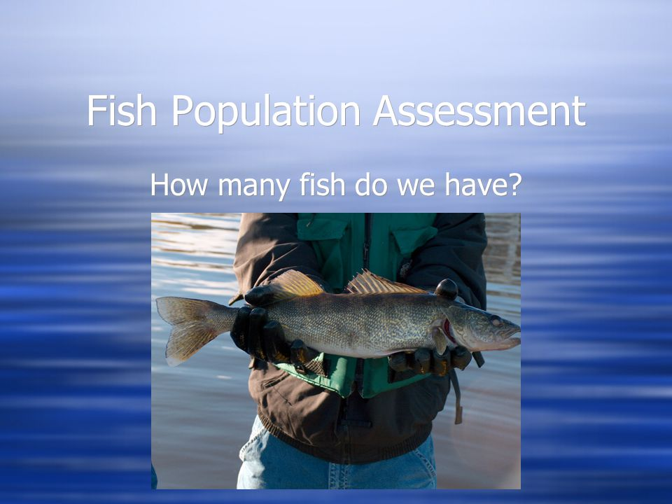Fish Population Assessment How many fish do we have