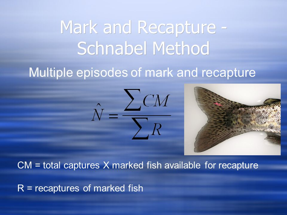 Mark and Recapture - Schnabel Method Multiple episodes of mark and recapture CM = total captures X marked fish available for recapture R = recaptures of marked fish