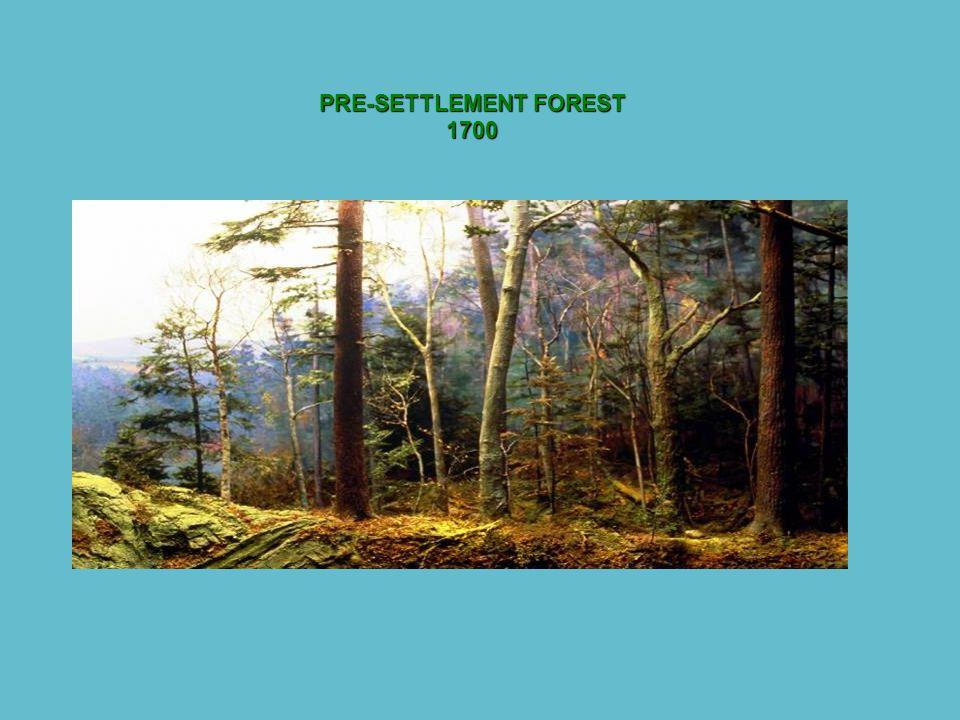 PRE-SETTLEMENT FOREST 1700