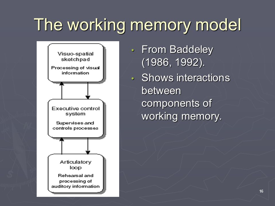 16 The working memory model From Baddeley (1986, 1992). Shows interactions between components of working memory.