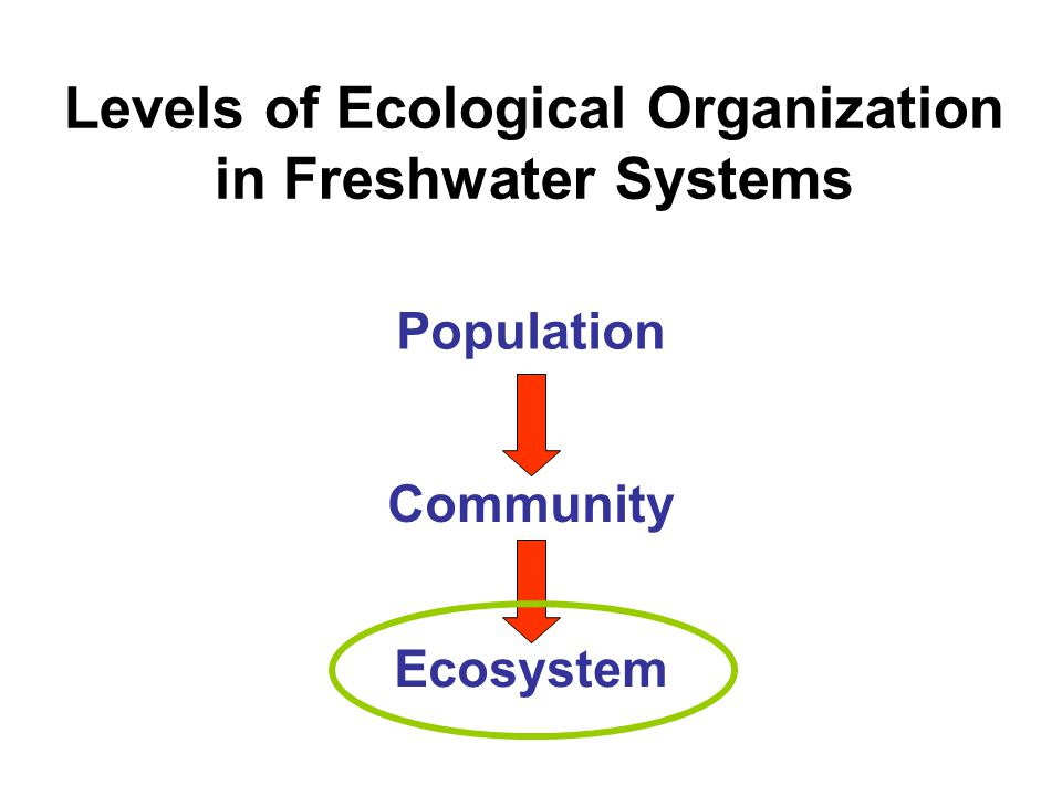 Levels of Ecological Organization in Freshwater Systems Population Community Ecosystem