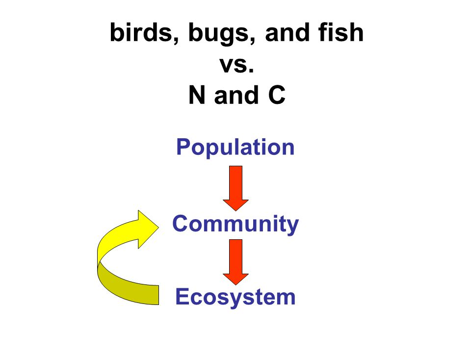 birds, bugs, and fish vs. N and C Population Community Ecosystem