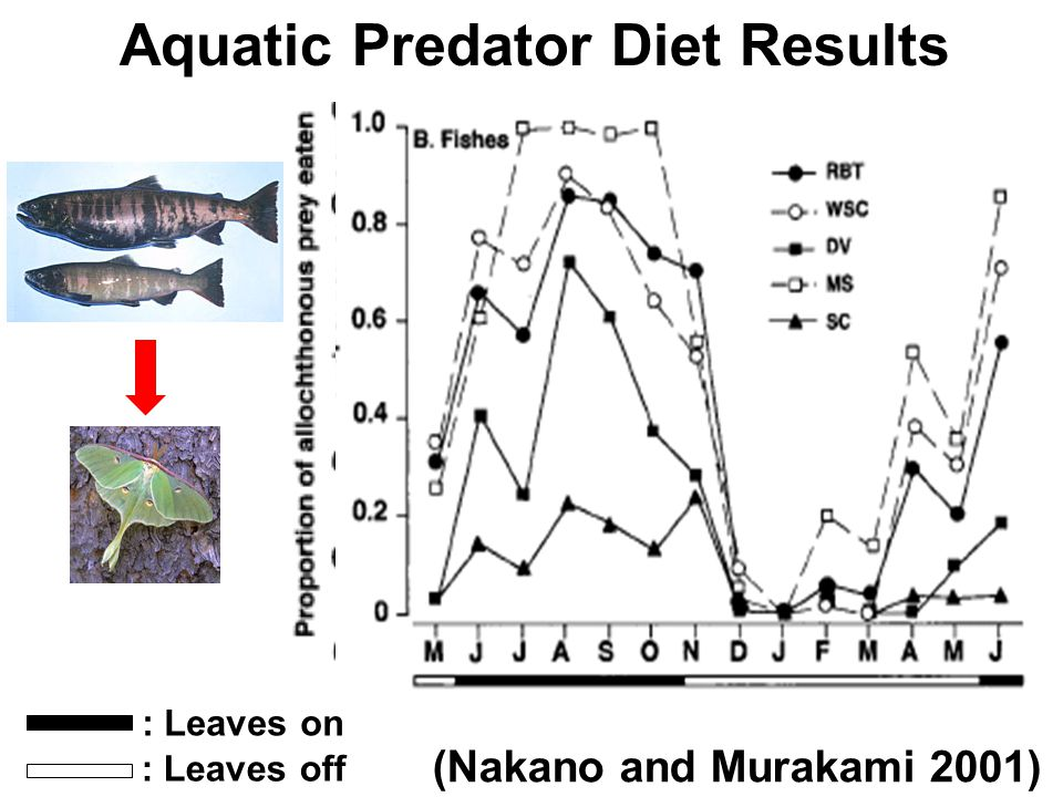 Aquatic Predator Diet Results (Nakano and Murakami 2001) : Leaves on : Leaves off