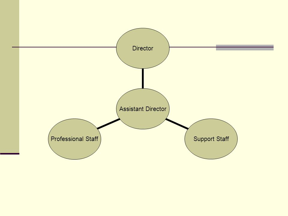 Assistant Director Director Support Staff Professional Staff