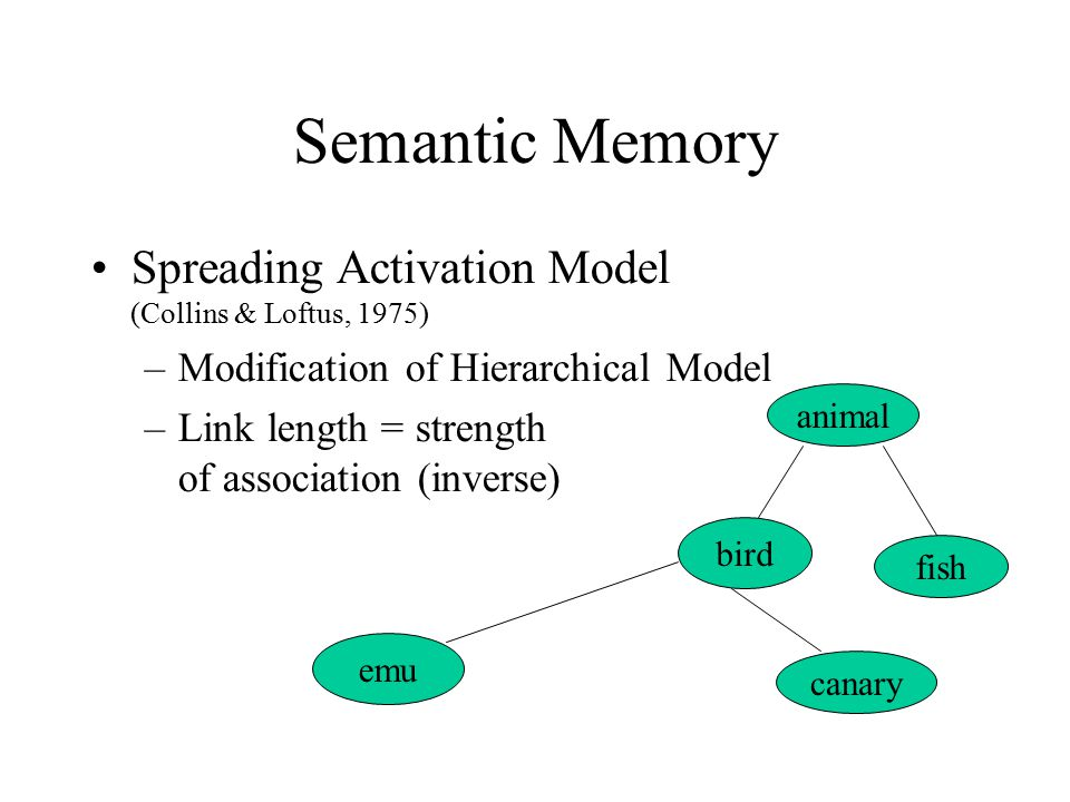 Semantic Memory Spreading Activation Model (Collins & Loftus, 1975) –Modification of Hierarchical Model –Link length = strength of association (inverse) animal bird fish canary emu