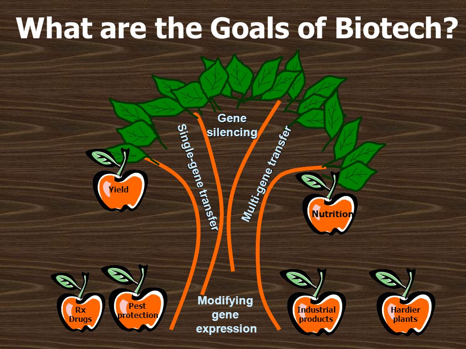 What are the Goals of Biotech? Single-gene transfer Genesilencing Multi-gene transfer Modifying gene expression Yield Nutrition Pest protection Rx Dru
