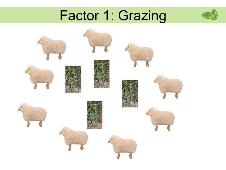 Factor 1: Grazing