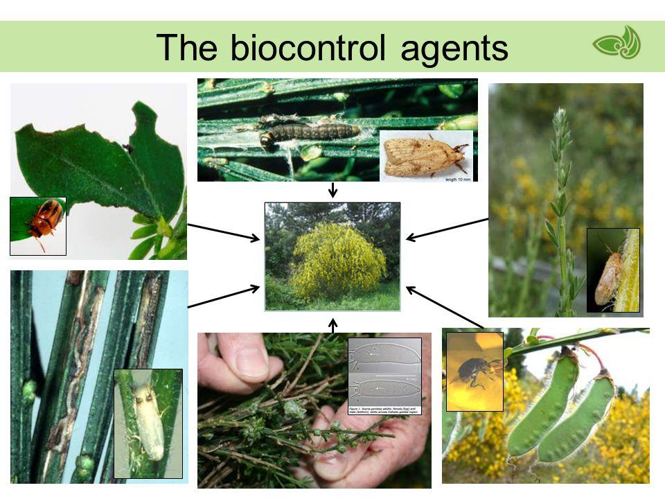 The biocontrol agents
