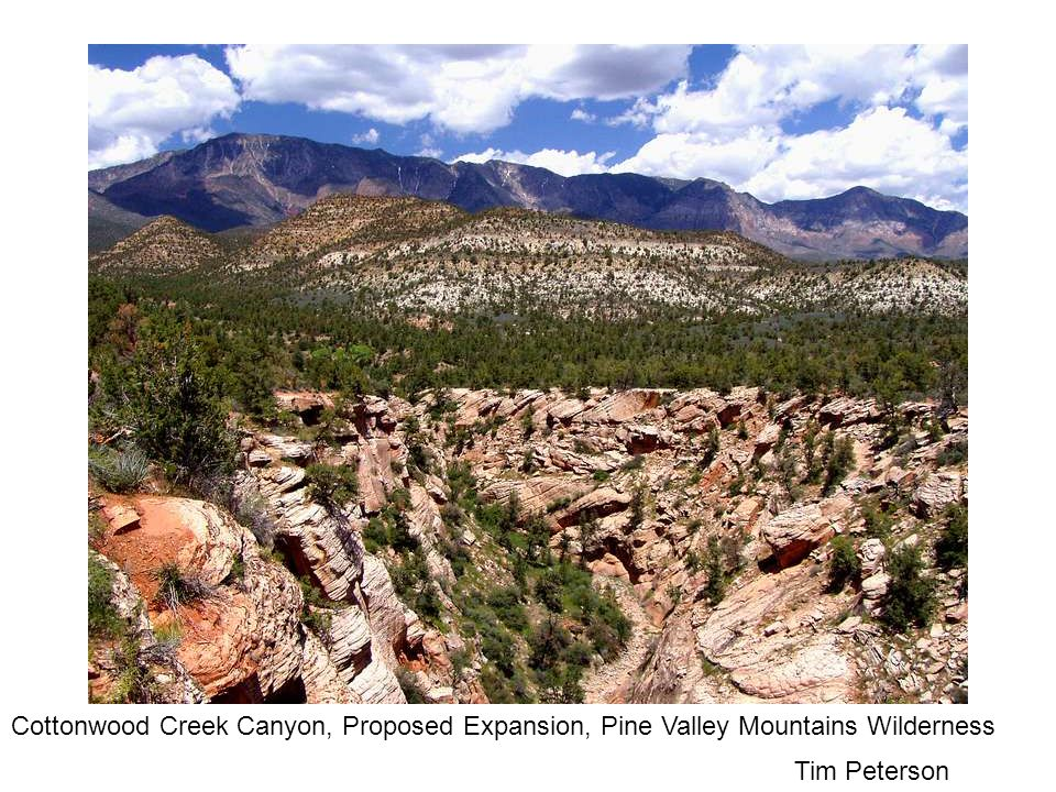 Tim Peterson Cottonwood Creek Canyon, Proposed Expansion, Pine Valley Mountains Wilderness