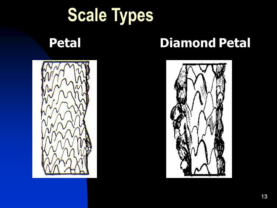 13 Scale Types PetalDiamond Petal