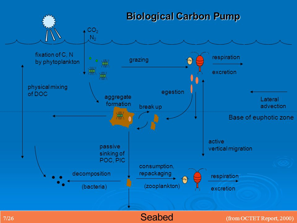 Biological Carbon Pump active vertical migration fixation of C, N by phytoplankton grazing egestion passive sinking of POC, PIC aggregate formation respiration excretion respiration physical mixing of DOC consumption, repackaging CO 2 N2N2 Seabed Base of euphotic zone decomposition break up (bacteria) (zooplankton) Lateral advection 7/26(from OCTET Report, 2000)