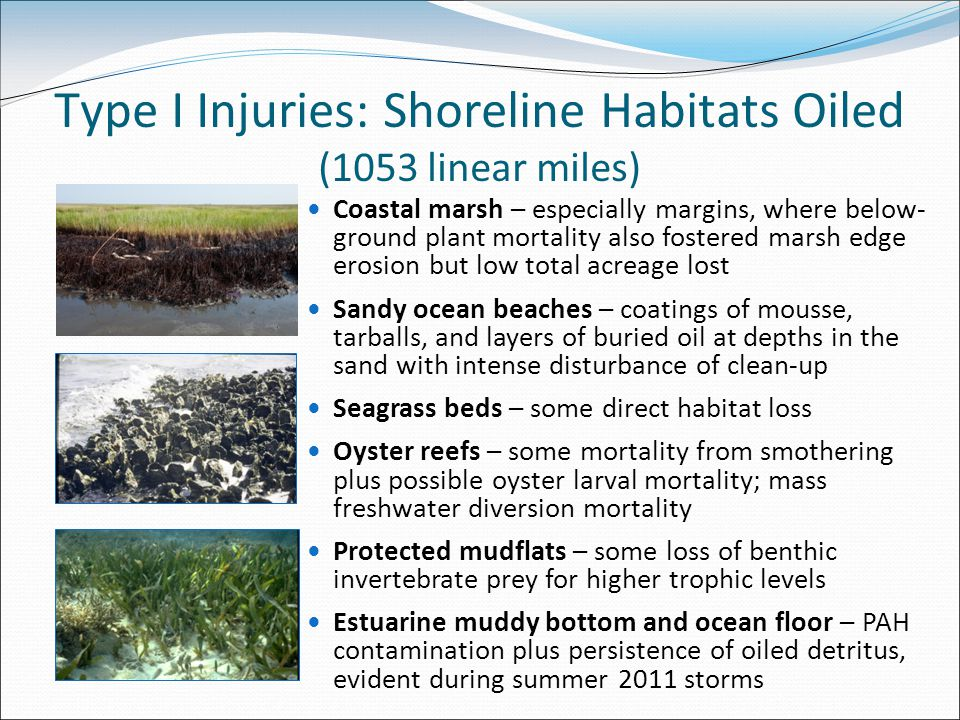 Type I Injuries: Shoreline Habitats Oiled (1053 linear miles) Coastal marsh – especially margins, where below- ground plant mortality also fostered marsh edge erosion but low total acreage lost Sandy ocean beaches – coatings of mousse, tarballs, and layers of buried oil at depths in the sand with intense disturbance of clean-up Seagrass beds – some direct habitat loss Oyster reefs – some mortality from smothering plus possible oyster larval mortality; mass freshwater diversion mortality Protected mudflats – some loss of benthic invertebrate prey for higher trophic levels Estuarine muddy bottom and ocean floor – PAH contamination plus persistence of oiled detritus, evident during summer 2011 storms