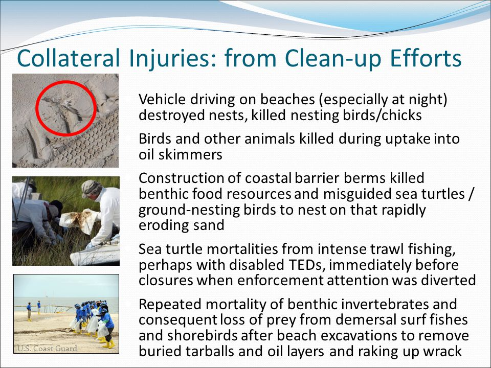 Collateral Injuries: from Clean-up Efforts Vehicle driving on beaches (especially at night) destroyed nests, killed nesting birds/chicks Birds and other animals killed during uptake into oil skimmers Construction of coastal barrier berms killed benthic food resources and misguided sea turtles / ground-nesting birds to nest on that rapidly eroding sand Sea turtle mortalities from intense trawl fishing, perhaps with disabled TEDs, immediately before closures when enforcement attention was diverted Repeated mortality of benthic invertebrates and consequent loss of prey from demersal surf fishes and shorebirds after beach excavations to remove buried tarballs and oil layers and raking up wrack U.S.