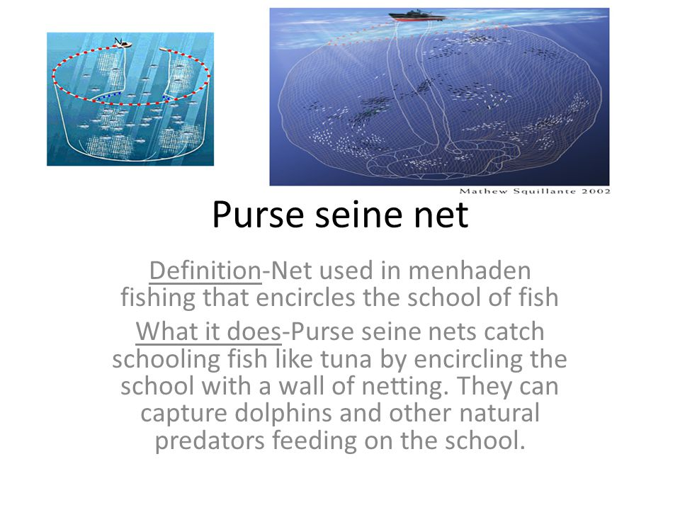 Purse seine net Definition-Net used in menhaden fishing that encircles the school of fish What it does-Purse seine nets catch schooling fish like tuna