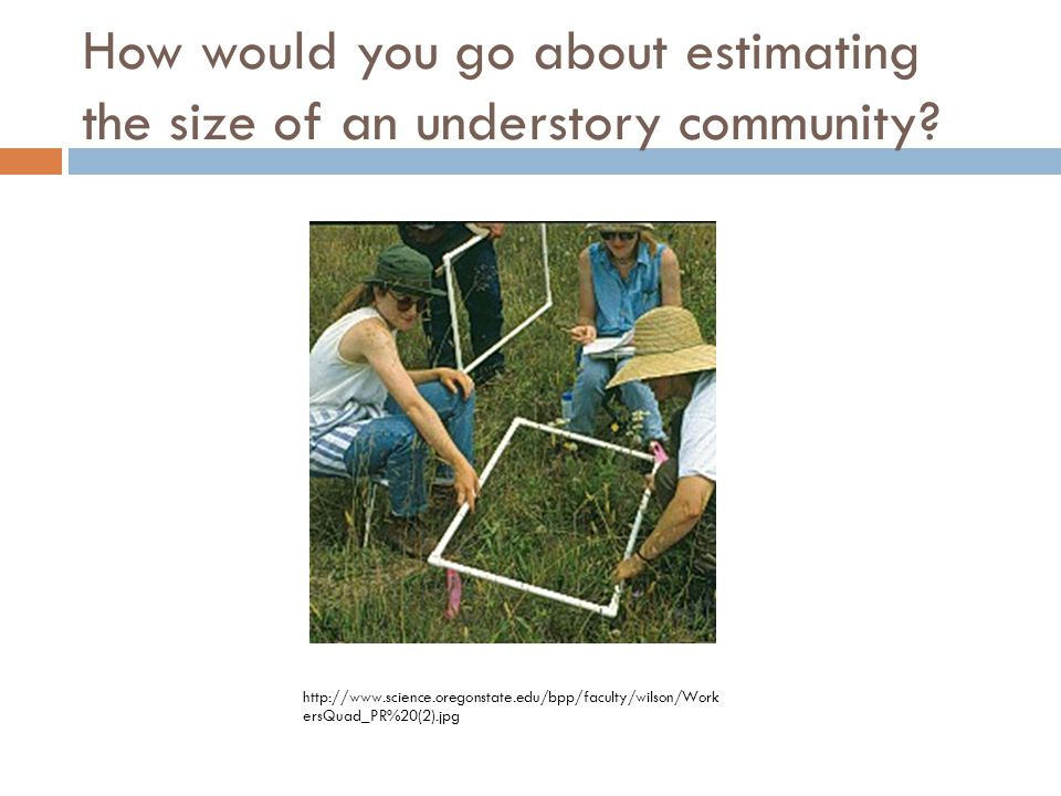How would you go about estimating the size of an understory community.