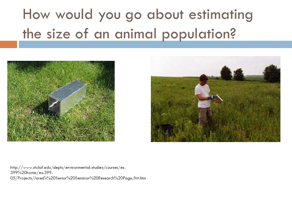 How would you go about estimating the size of an animal population.