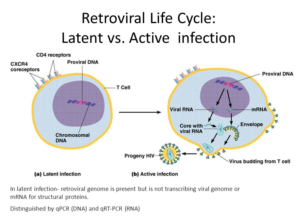 In latent infection- retroviral genome is present but is not transcribing viral genome or mRNA for structural proteins.