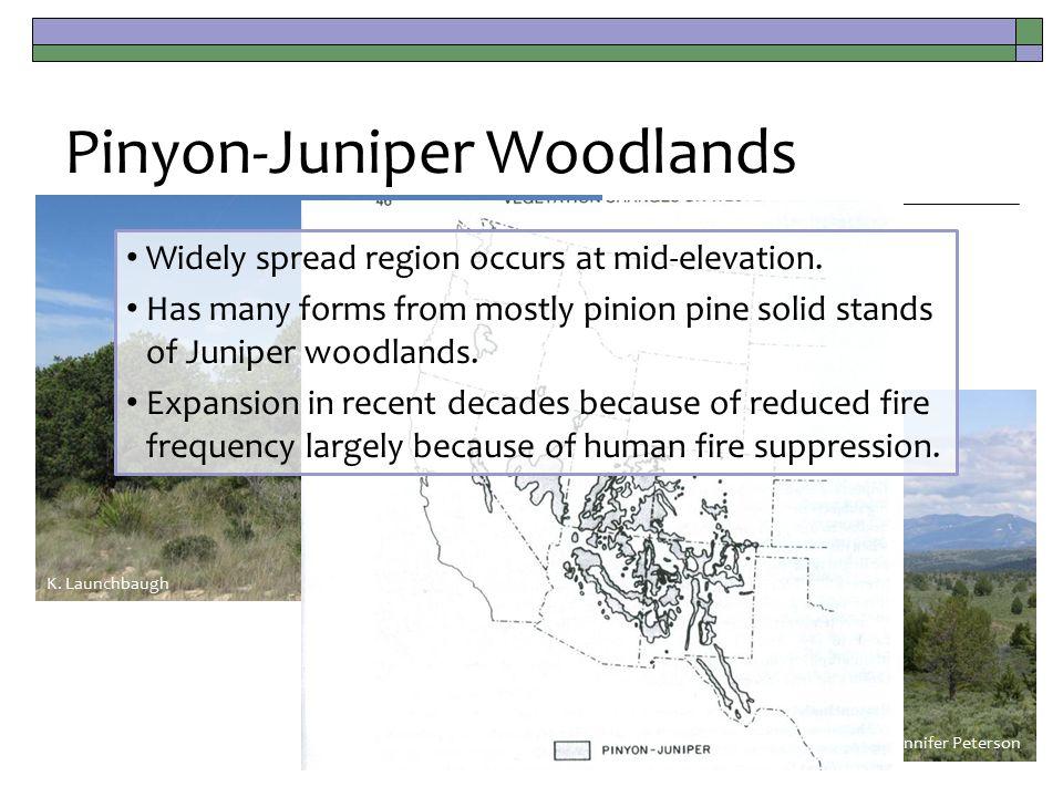 Pinyon-Juniper Woodlands Jennifer Peterson K.