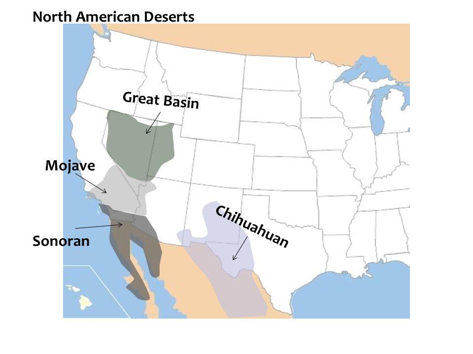 Chihuahuan Great Basin Mojave Sonoran North American Deserts