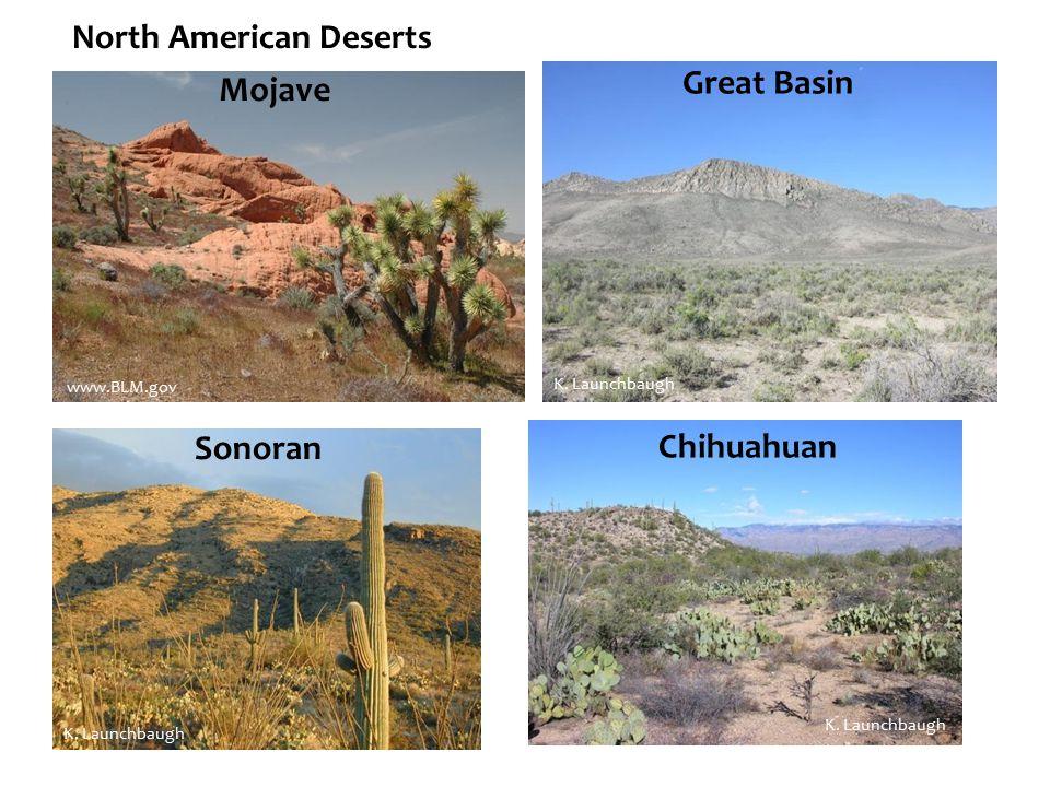 Chihuahuan Great Basin Mojave Sonoran North American Deserts K. Launchbaugh www.BLM.gov