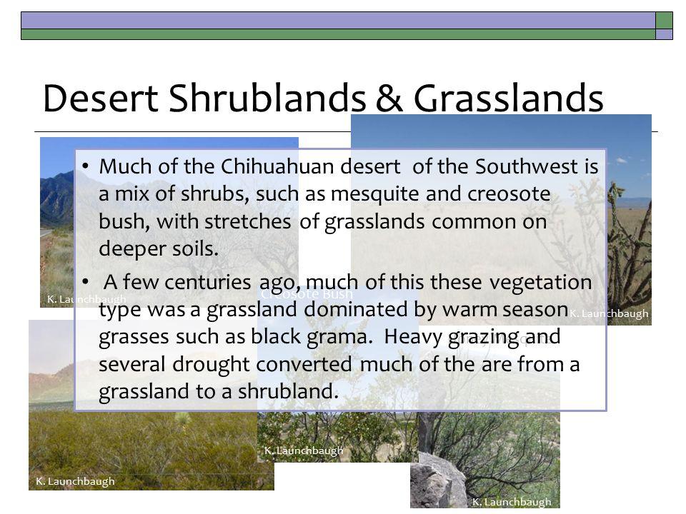 Desert Shrublands & Grasslands K.