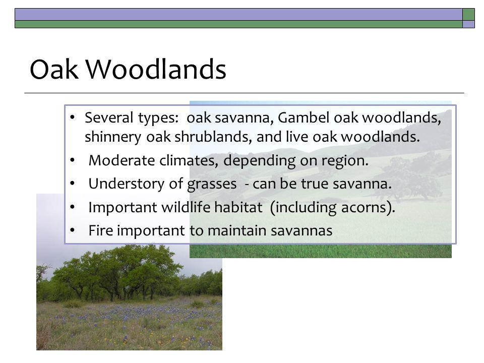 Oak Woodlands Several types: oak savanna, Gambel oak woodlands, shinnery oak shrublands, and live oak woodlands.