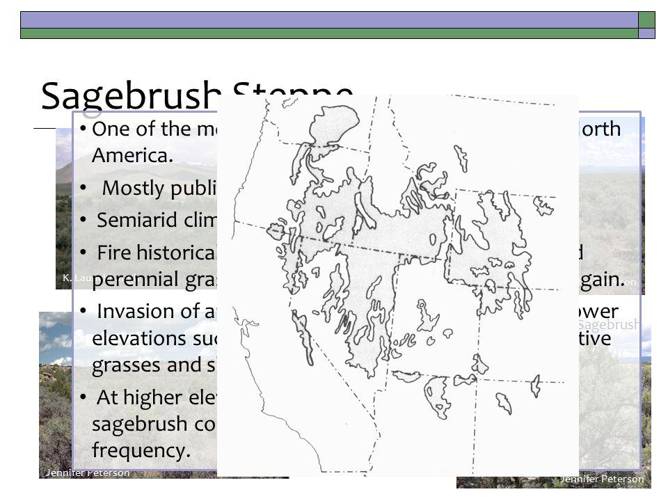 Sagebrush Steppe Jennifer Peterson K. Launchbaugh S.C.