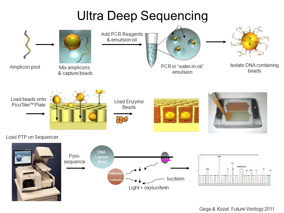 Read Flowgram Ultra Deep Sequencing Mix amplicons & capture beads Isolate DNA containing beads PCR in water-in-oil emulsion Add PCR Reagents & emulsion oil Amplicon pool A B Micro-reactors Load Enzyme Beads Load beads onto PicoTiter™Plate DNA Capture Bead T ATP Light + oxyluciferin Sulfurylase Luciferase APS luciferin PPi Load PTP on Sequencer Pyro- sequence Gega & Kozal.