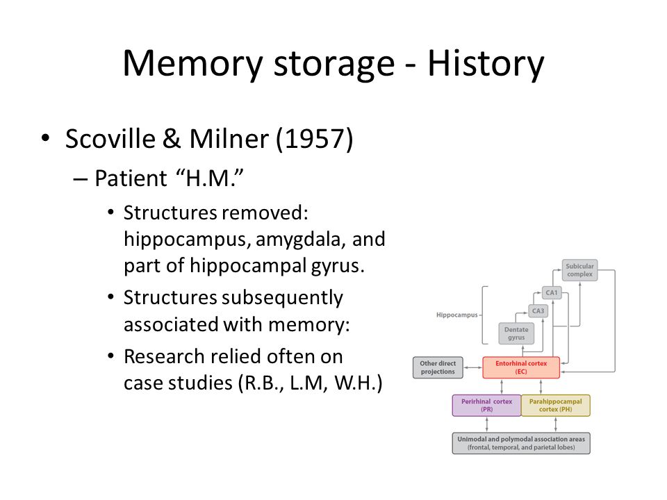 Memory storage - History Scoville & Milner (1957) – Patient H.M. Structures removed: hippocampus, amygdala, and part of hippocampal gyrus.