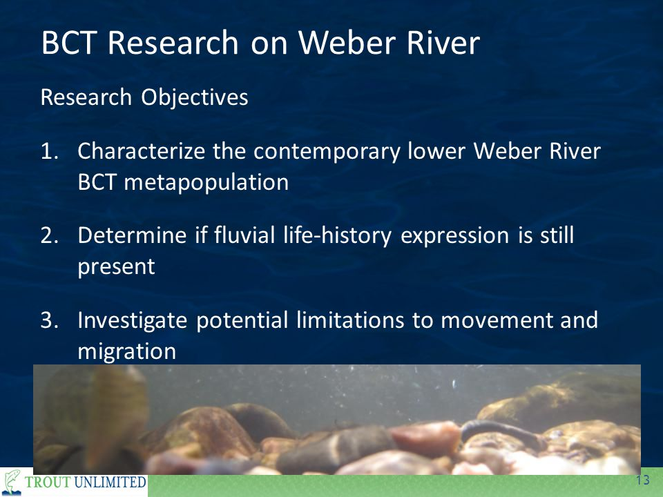 13 Research Objectives 1.Characterize the contemporary lower Weber River BCT metapopulation 2.Determine if fluvial life-history expression is still present 3.Investigate potential limitations to movement and migration BCT Research on Weber River