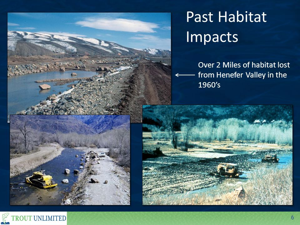 6 Past Habitat Impacts Over 2 Miles of habitat lost from Henefer Valley in the 1960's