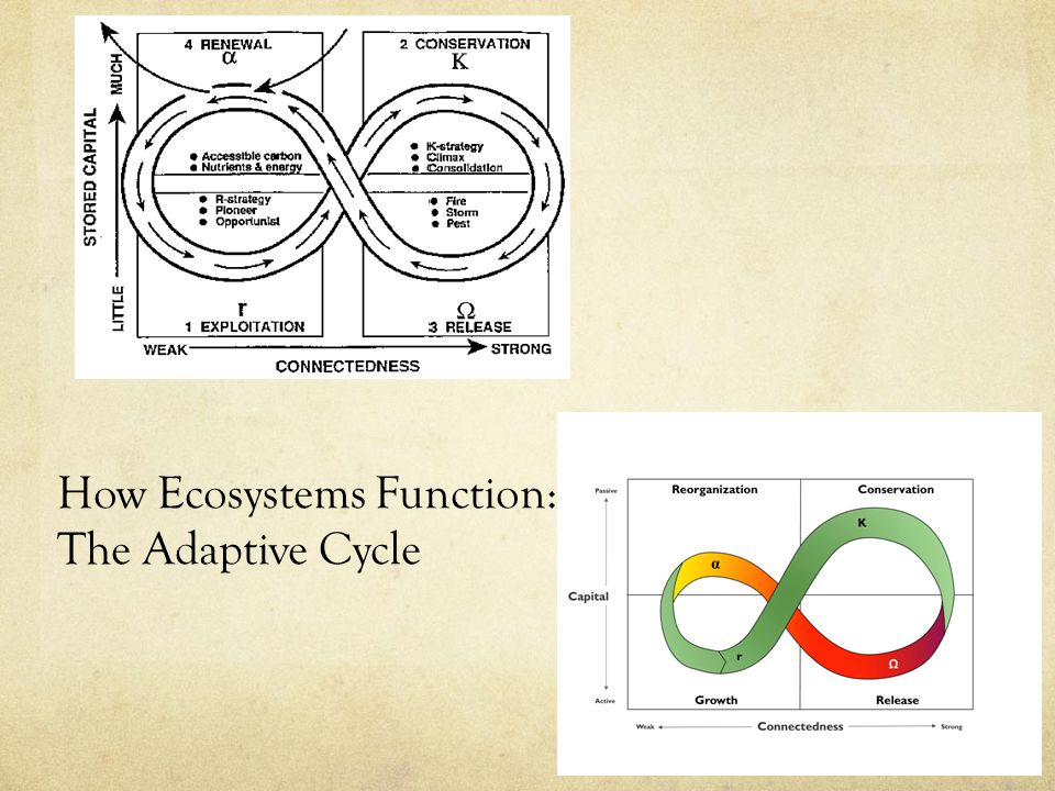 How Ecosystems Function: The Adaptive Cycle