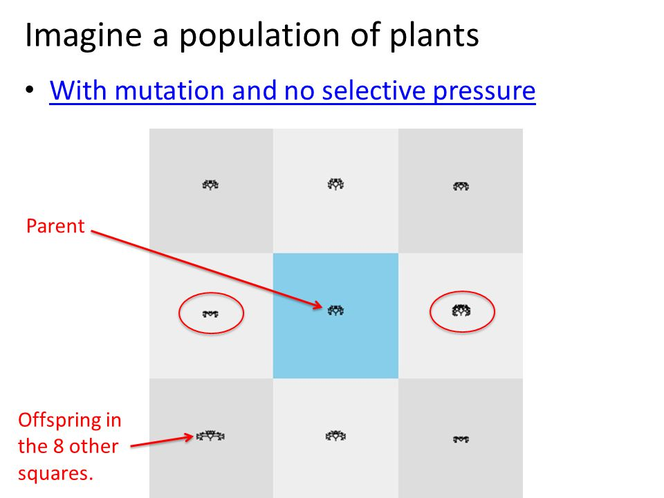 Imagine a population of plants With mutation and no selective pressure Parent Offspring in the 8 other squares.