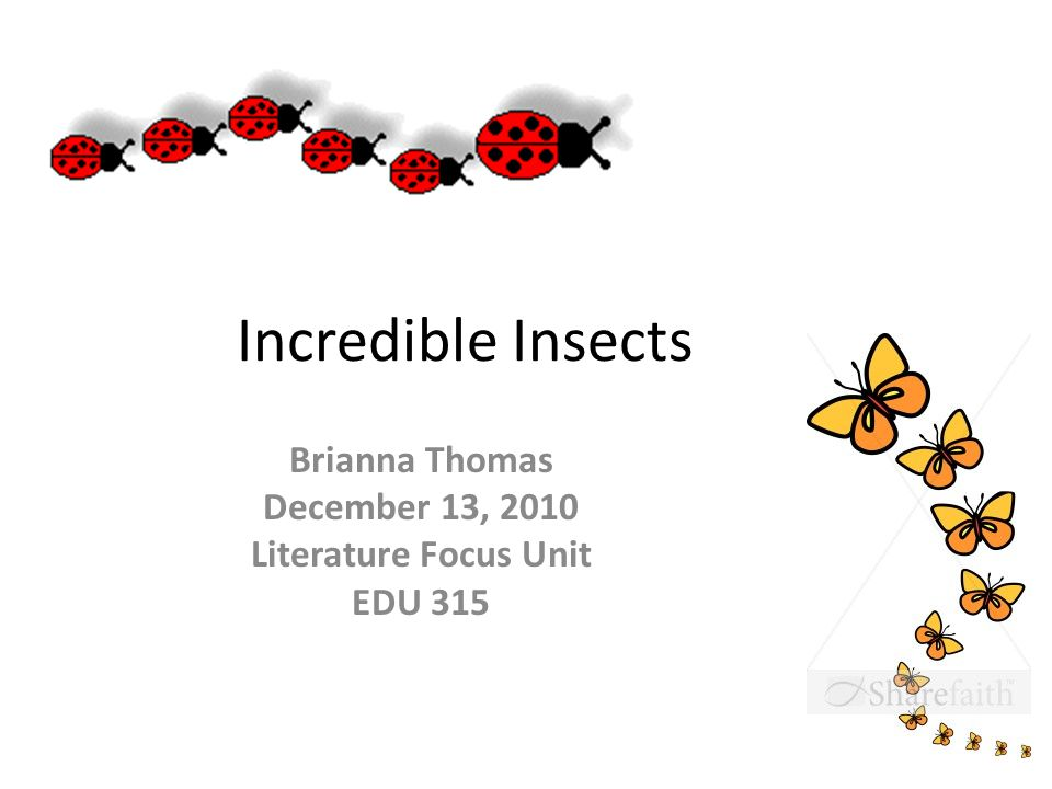 Incredible Insects Brianna Thomas December 13, 2010 Literature Focus Unit EDU 315
