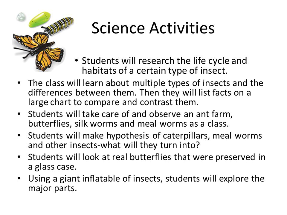 Science Activities Students will research the life cycle and habitats of a certain type of insect.