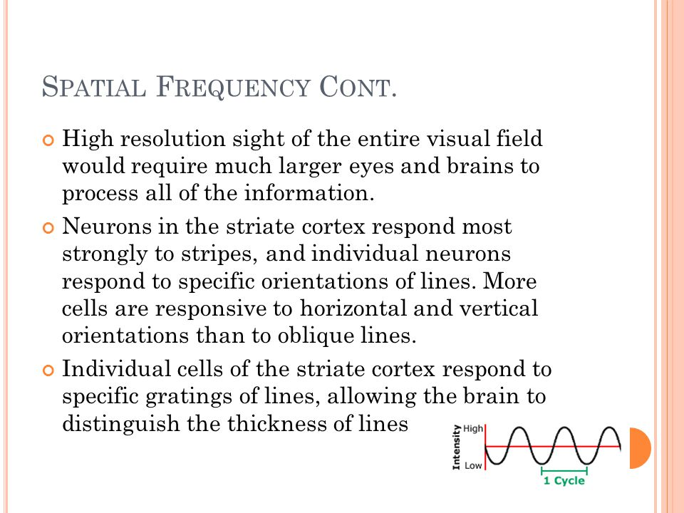 S PATIAL F REQUENCY C ONT. High resolution sight of the entire visual field would require much larger eyes and brains to process all of the informatio