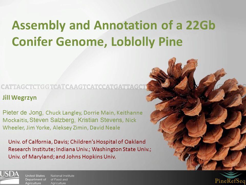 Assembly and Annotation of a 22Gb Conifer Genome, Loblolly Pine Jill Wegrzyn Pieter de Jong, Chuck Langley, Dorrie Main, Keithanne Mockaitis, Steven Salzberg, Kristian Stevens, Nick Wheeler, Jim Yorke, Aleksey Zimin, David Neale Univ.