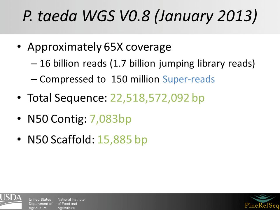 P. taeda WGS V0.8 (January 2013) Approximately 65X coverage – 16 billion reads (1.7 billion jumping library reads) – Compressed to 150 million Super-r