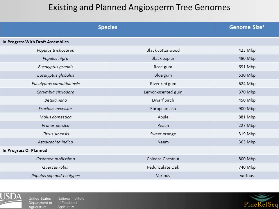 Existing and Planned Angiosperm Tree Genomes SpeciesGenome Size 1 In Progress With Draft Assemblies Populus trichocarpaBlack cottonwood423 Mbp Populus