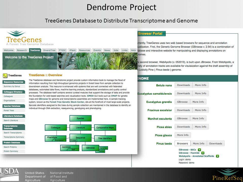 Dendrome Project TreeGenes Database to Distribute Transcriptome and Genome