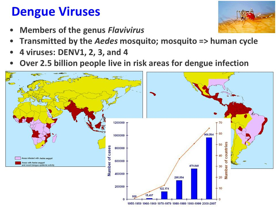 Dengue Viruses Members of the genus Flavivirus Transmitted by the Aedes mosquito; mosquito => human cycle 4 viruses: DENV1, 2, 3, and 4 Over 2.5 billion people live in risk areas for dengue infection