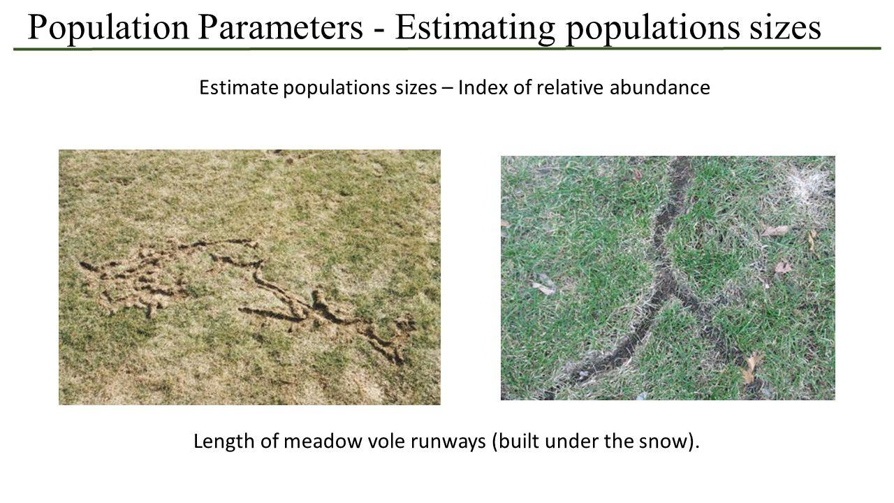 Estimate populations sizes – Index of relative abundance Estimating pheasant populations through roadside surveys Population Parameters - Estimating populations sizes