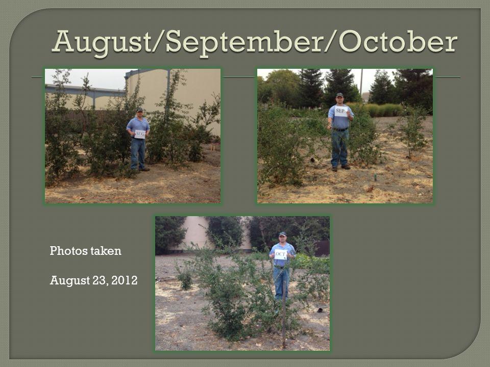 Photos taken August 23, 2012