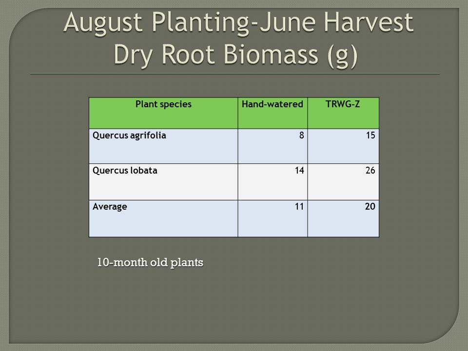  Late summer planting appears to allow sufficient photosynthesis resulting in ample carbohydrate storage for spring plant growth  Zinc and Glacial Acetic Acid contribute to the production of essential growth over potable water with no nutrients  Using TRWG-Z contributes to overall water efficiency  No plants received water after 12 weeks -1 fatality-continual moisture appears necessary