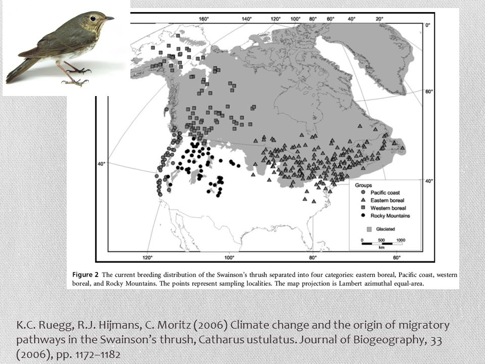 K.C. Ruegg, R.J. Hijmans, C. Moritz (2006) Climate change and the origin of migratory pathways in the Swainson's thrush, Catharus ustulatus. Journal o