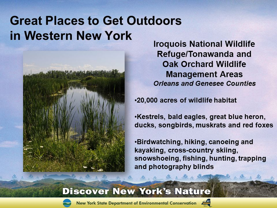 Great Places to Get Outdoors in Western New York Iroquois National Wildlife Refuge/Tonawanda and Oak Orchard Wildlife Management Areas Orleans and Gen