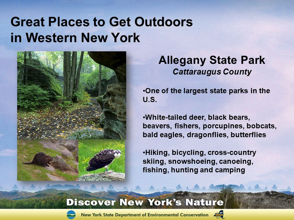 Great Places to Get Outdoors in Western New York Allegany State Park Cattaraugus County One of the largest state parks in the U.S. White-tailed deer,