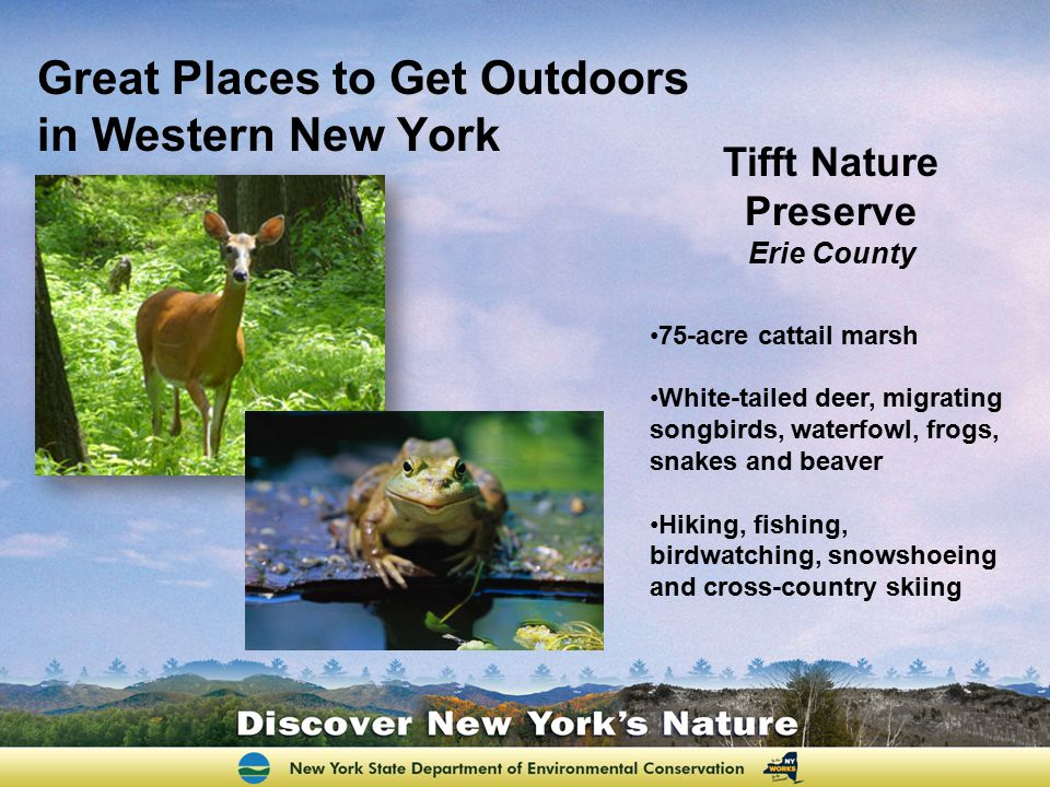 Great Places to Get Outdoors in Western New York Tifft Nature Preserve Erie County 75-acre cattail marsh White-tailed deer, migrating songbirds, water