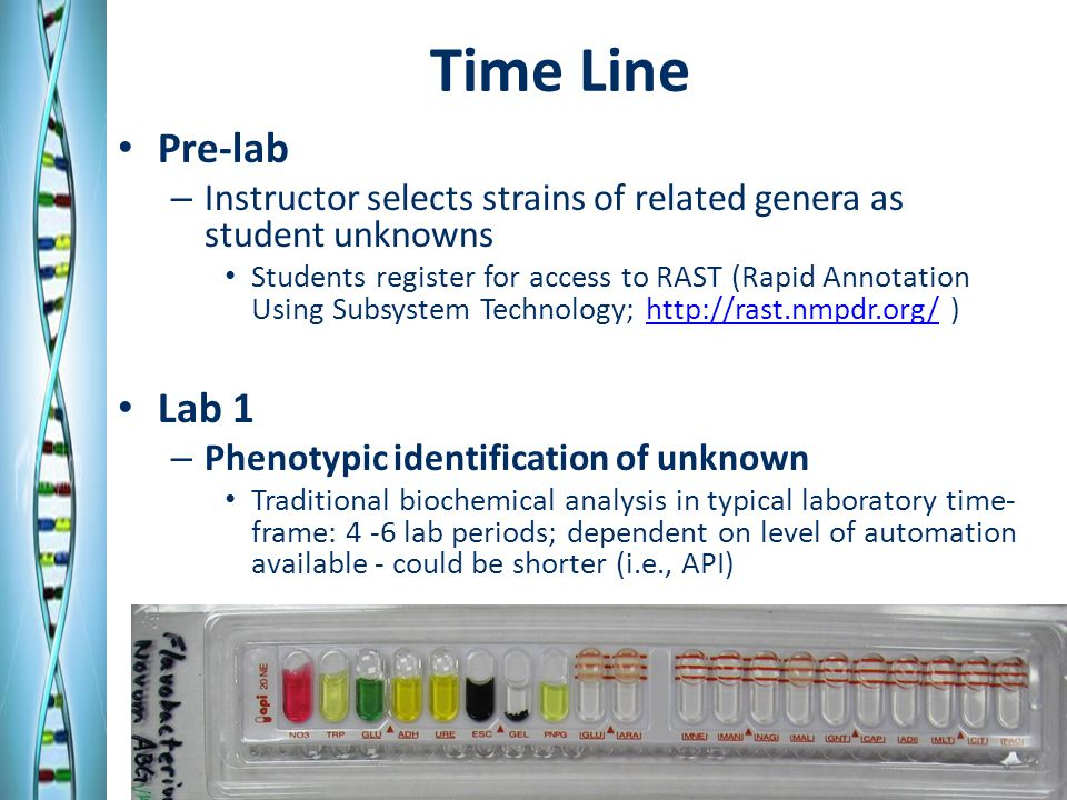 Time Line (cont'd) Post-identification Lab 1 – Prior to lab Retrieve genome sequence of proposed unknown type-strain – Submit sequence to RAST for automated annotation Post-identification Lab 2 – Identify subsystems associated with phenotypic traits – Determine gene common to all identified organisms – Using RAST, obtain selected gene sequence – BLAST sequence and select orthologs of species identified by other students.